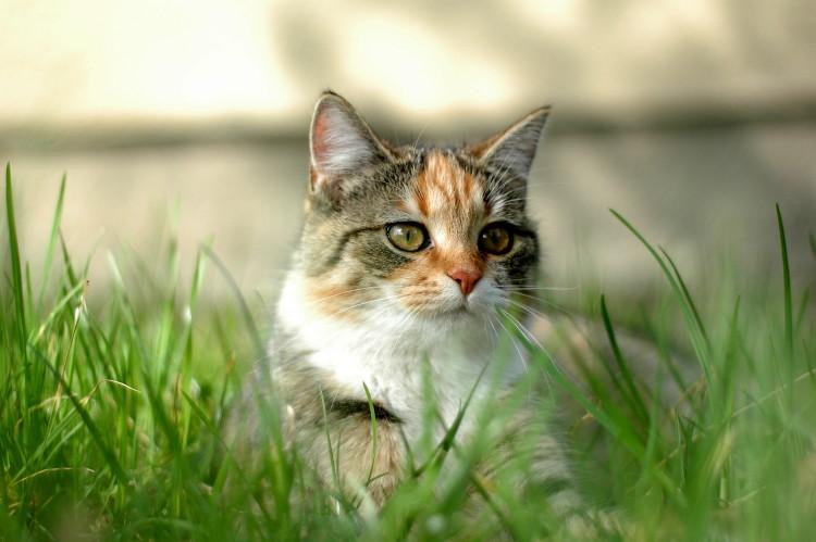 cats_of_palm_beach.jpg