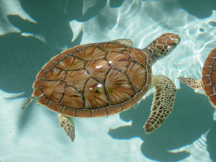 palm_beach_sea_turtles.jpg