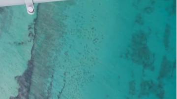 thousands_of_sharks_off_palm_beach.jpg