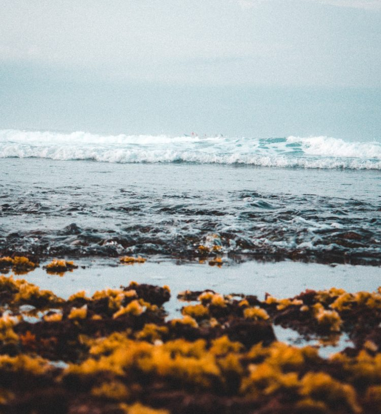 Palm Beach Faces Complaints About Seaweed