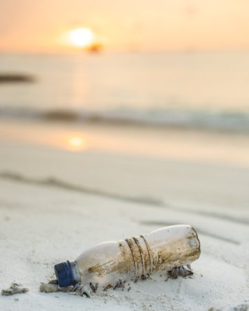 Palm Beach to Prohibit Plastics